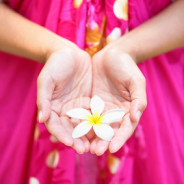 Hawaiian flower in cupped hands of woman wearing sarong. Hawaii concept with typical Plumeria flowers.